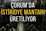 ÇORUM'DA İSTİRİDYE MANTARI ÜRETİLİYOR